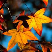 Desafio do Mês de Março: Outono